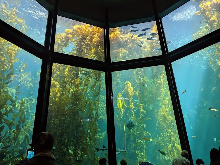Monterey Bay Aquarium 1-Year Family Membership - Image 1