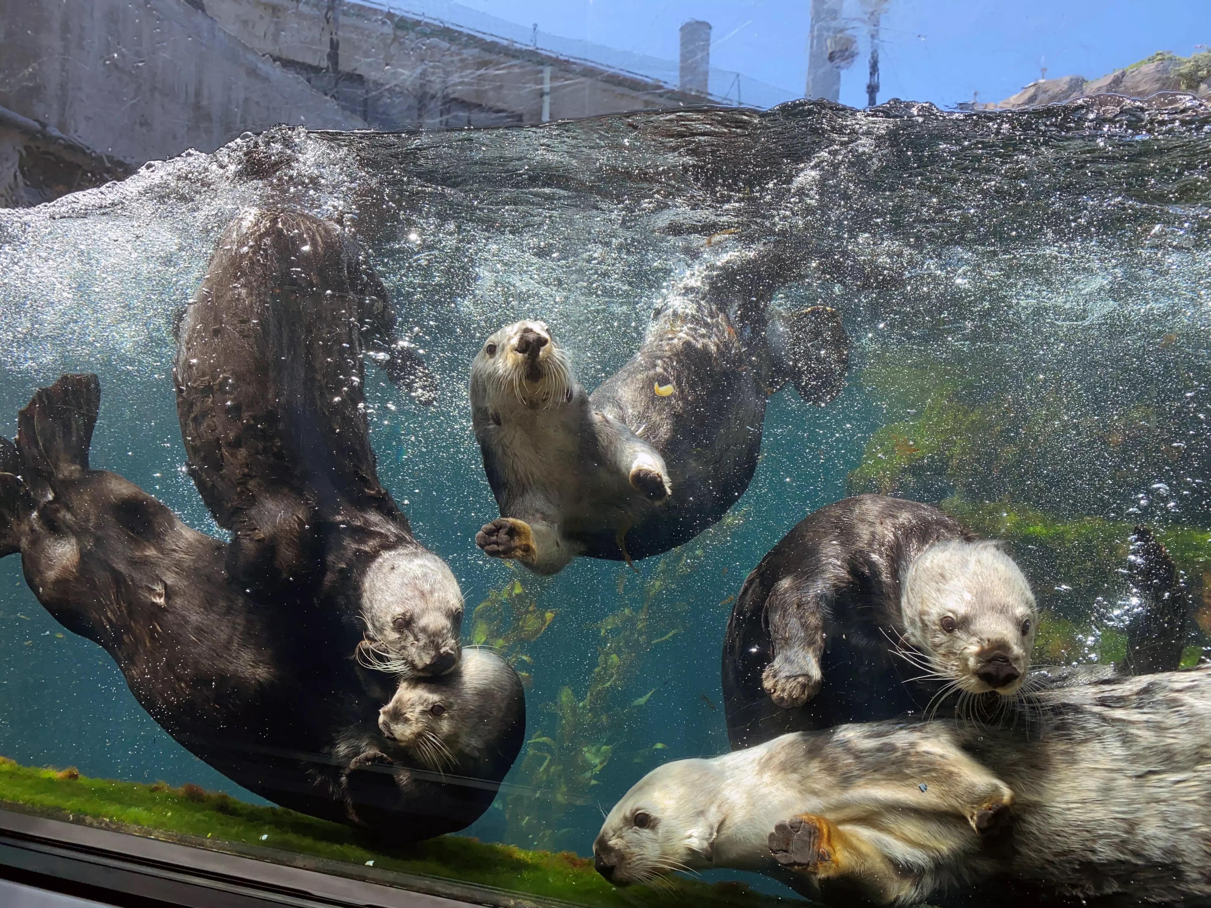 Monterey Bay Aquarium - Family Membership - Image 1