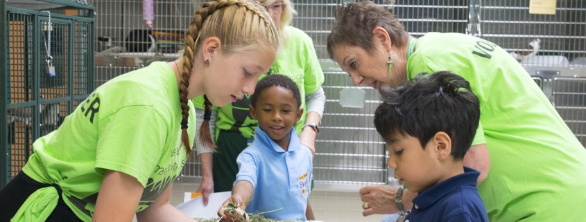 Kids For Animals Session 2 - Image 1