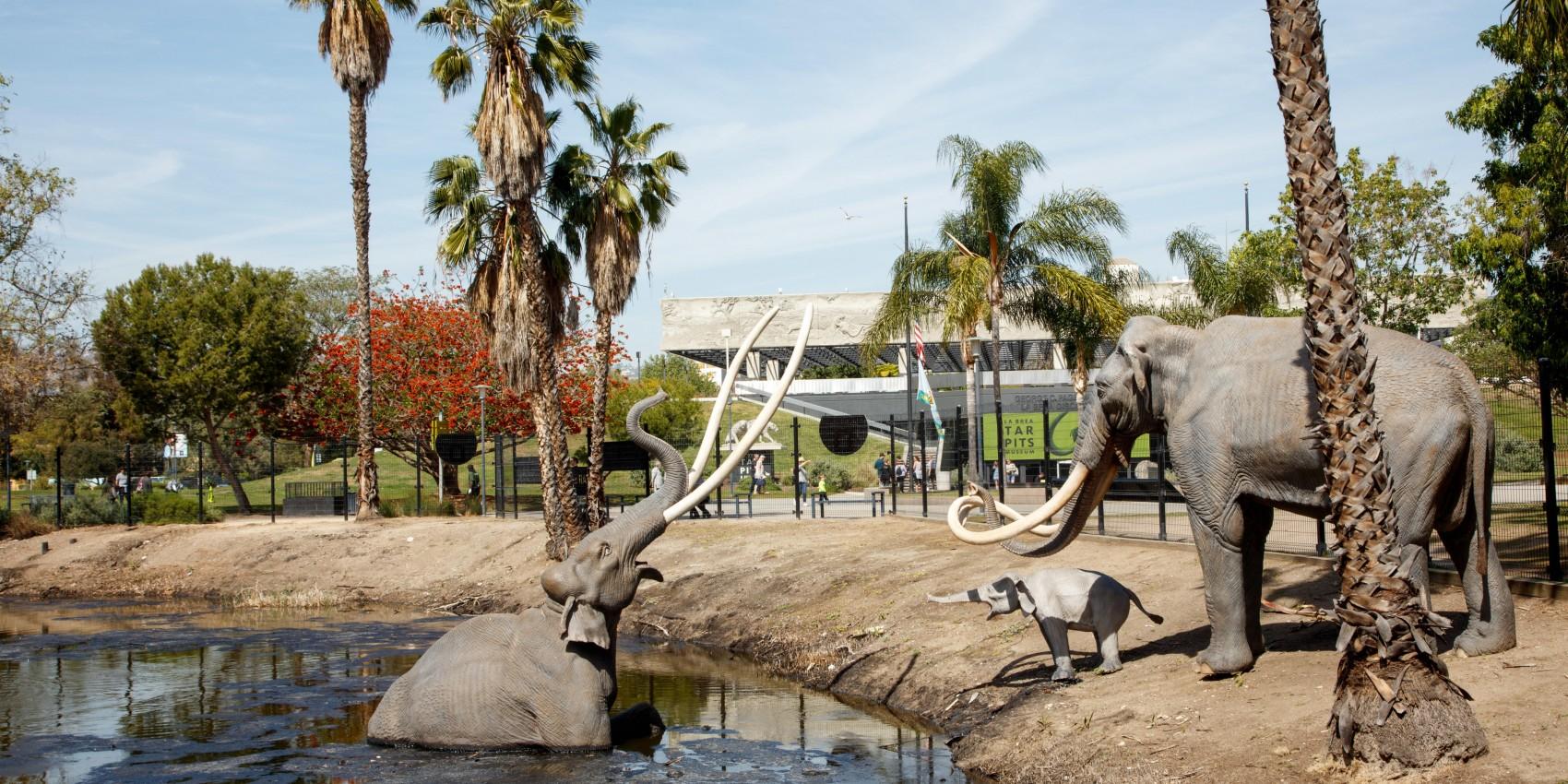 Natural History Museums of LA County Membership - Family Plan - Image 1